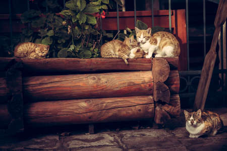 Cute red cats family with kitten resting on wooden logs in rural countryside village in vintage rustic style