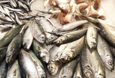 dead fish: Fresh fishes in a market