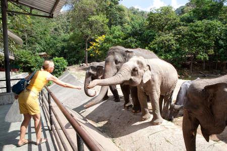 zoo youth: Woman feeding the elephant bananas at the zoo