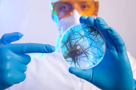 quarantine: Scientist holding a petri dish with virus cells Stock Photo