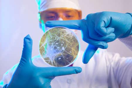 colera: Científico que sostiene una placa de Petri con las células del virus