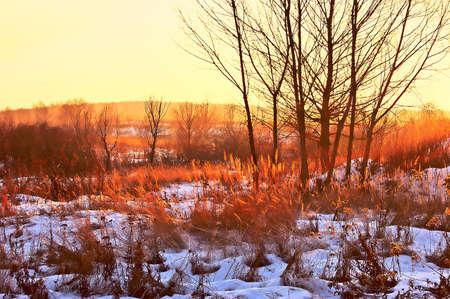 miracle leaf: Winter. Orange sunset. Decline paints.