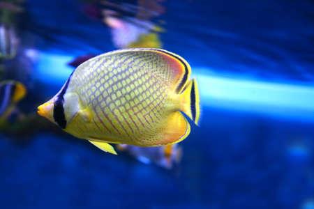 coral colored: Sea fish.