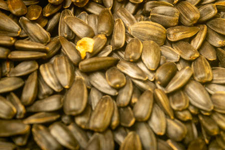 Roasted sunflower seeds with a scattering surface texture. Close up Standard-Bild