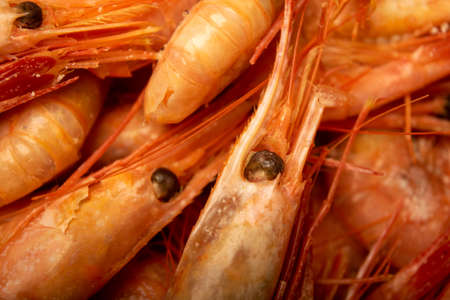 Cooked Atlantic shrimps. Close up. A traditional food of coastal cuisine