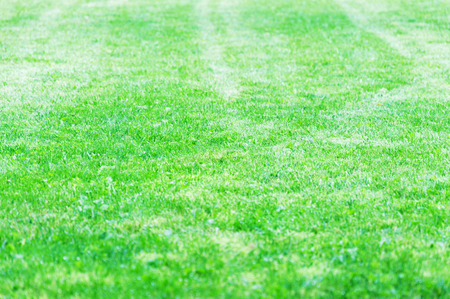 Lawn of a country house neatly cut with a lawn mower. Mixed media Stock Photo