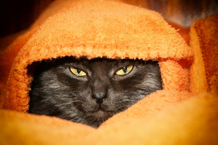likes: Cat likes  to be warm