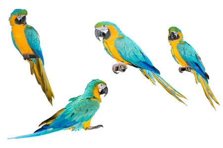 A collection of parrot macaws