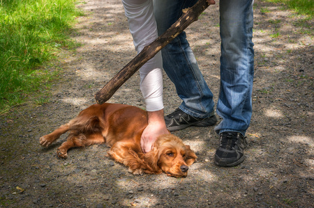 Man holds a stick in hand and he wants to hit the dog - dog abuse