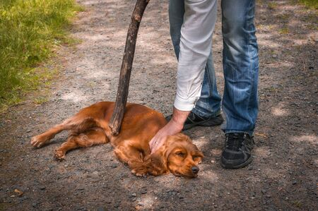 Man holds a stick in hand and he wants to hit the dog - dog abuse. Stock Photo