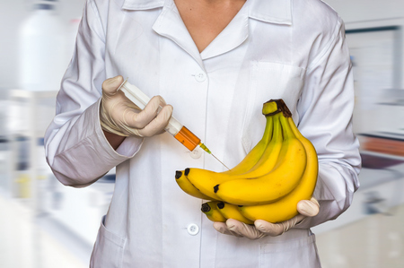 GMO experiment: Scientist injecting liquid from syringe into yellow bananas in agricultural research laboratory Stock Photo