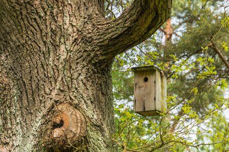 nesting: Nesting box, birdhouse for birds on the tree