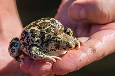 part frog: Frog Stock Photo