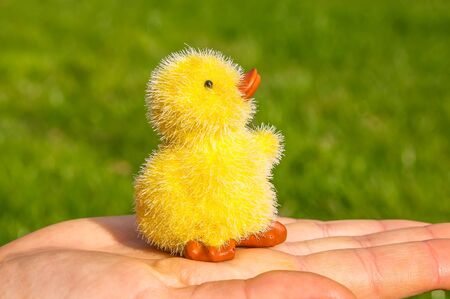 agachado: Small ducking sits on a human hand