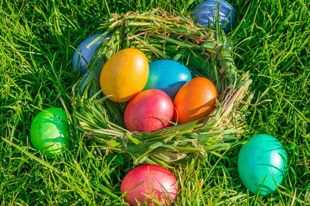 Nest with colored eggs on the green grass