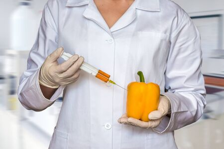 increase fruit: GMO experiment: Scientist injecting liquid from syringe into yellow pepper in agricultural research laboratory