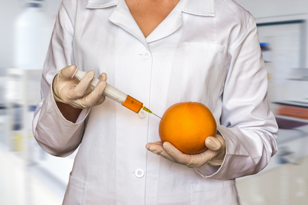 GMO experiment: Scientist injecting liquid from syringe into grapefruit in agricultural research laboratory