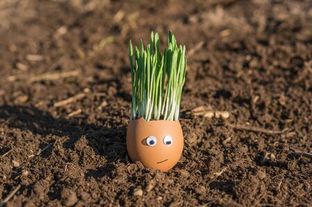 Happy egg family on the soil, Easter Stock Photo