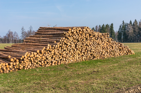 Wooden logs or trunks of trees cut and stacked on the ground in field