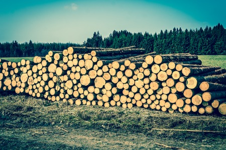 Wooden logs or trunks of trees cut and stacked on the ground in field - retro style Stock Photo