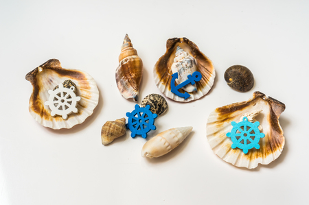 Decorated sea shells with marine wheel and anchor isolated on white