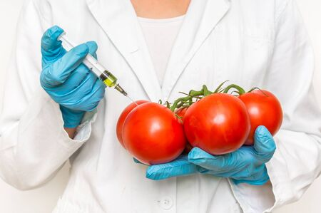 GMO scientist injecting liquid from syringe into red tomatoes - genetically modified food concept