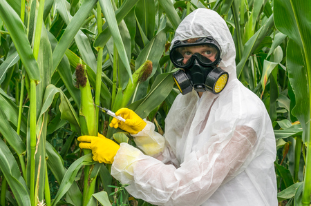 GMO scientist in coveralls and gas mask genetically modifying corn with syringe at maize field