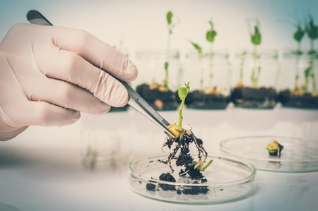 Scientist testing GMO plant in laboratory - biotechnology and GMO concept - retro style