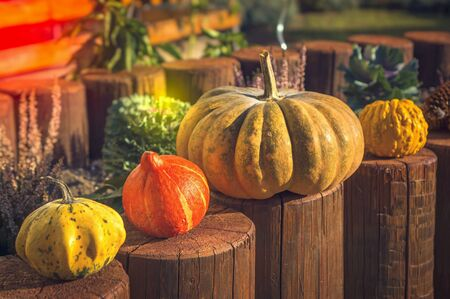 Decorative pumpkins in autumn garden - seasonal concept