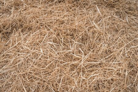 Hay or straw grass after harvest at country farm field - nature background