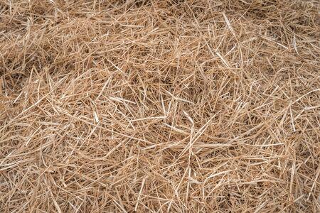 Heu- oder Strohgras nach der Ernte auf dem Landbauernhoffeld - Naturhintergrund