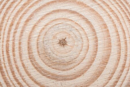 Wooden tree cut surface with organic tree rings - close-up view Standard-Bild