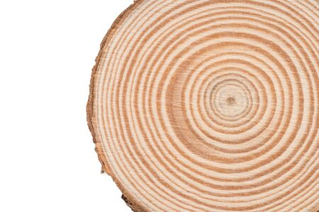 Wooden tree cut surface isolated on white background Standard-Bild