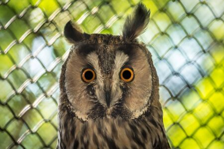 Close-up portrait of owl with big eyes