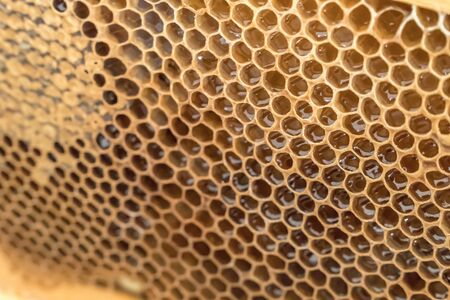 Natural honeycomb with honey from a bee hive