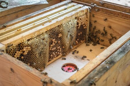 Natural honeycomb with honey and bees from a bee hive 스톡 콘텐츠