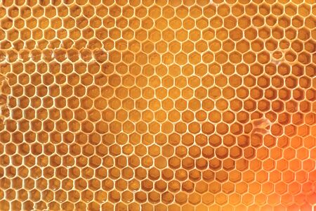 Natural honeycomb with honey from a bee hive Archivio Fotografico