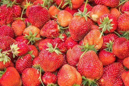 Many fresh strawberries on background - red ripe strawberries
