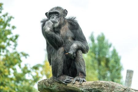 Monkey in zoological garden