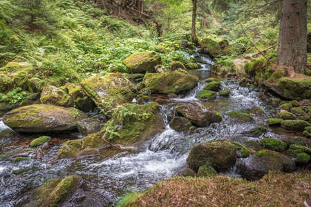 Mountain cascade stream in green forest at summer time