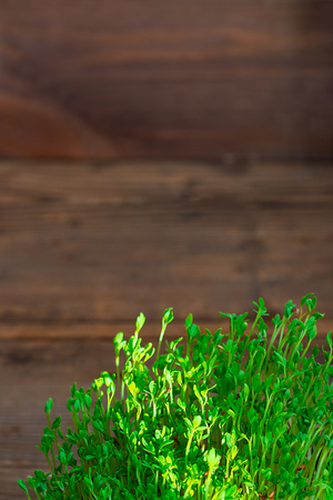 Fresh green watercress microgreens on wooden rustic brown background with copy space vertical