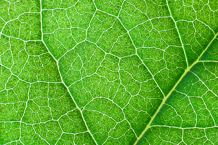 Green nerved leaf with abstract pattern. Abstract background for botany, biology, ecology. Horizontal with copy space. Macro