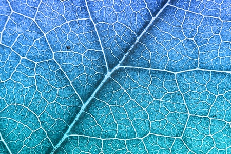 Green nerved leaf with abstract pattern. Abstract background for botany, biology, ecology. Horizontal with copy space. Blue duotone. Macro Banco de Imagens