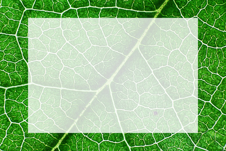 Green nerved leaf with abstract pattern. Abstract background with white box for text and design in the middle for botany, biology, ecology. Horizontal with copy space. Macro