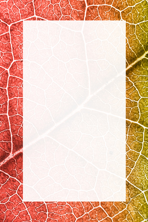 Green nerved leaf with abstract pattern. Abstract background with white box for text and design in the middle for botany, biology, ecology. Vertical with copy space. Coral duotone. Macro Banco de Imagens