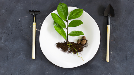 Fresh green leaves with root and little soil on white plate, chalkboard textured background. Top view, horizontal banner with copy space. Nature, Ecology concept,