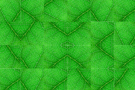 Green nerved leaf cubes with abstract symmetric pattern. Abstract background for botany, biology, ecology. Horizontal with copy space Banco de Imagens