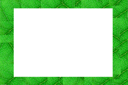 Green nerved leaf cubes with abstract pattern with white copy space for design in the middle. Abstract background for botany, biology, ecology. Horizontal