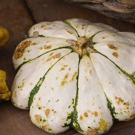 Halloween autumn decorative background star shaped white with stripes squash pumpkins in natural basket and aged line rope backdrop. Wallpaper about gardening and harvest, healthy product, Square