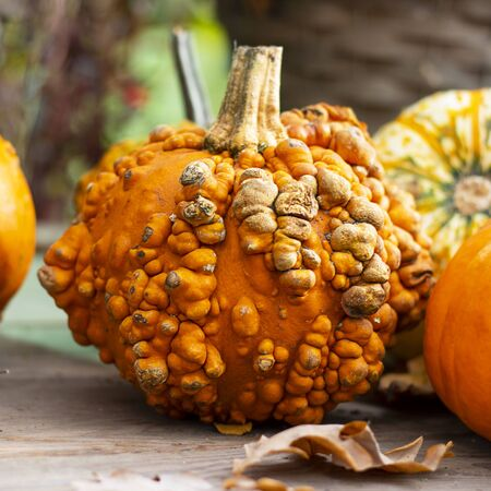 Halloween autumn decorative background round colorful warty squash pumpkins on wooden table with defocused red pepper in pot. Wallpaper gardening, harvest, healthy product, design, Vertical, Closeup Imagens